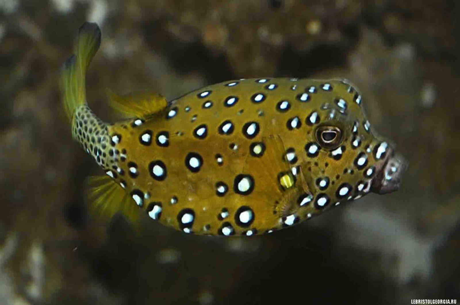 аквариум батуми