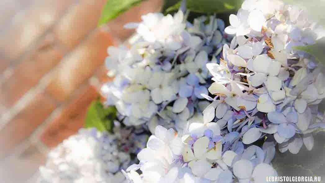 цветы на площади пьяцца батуми