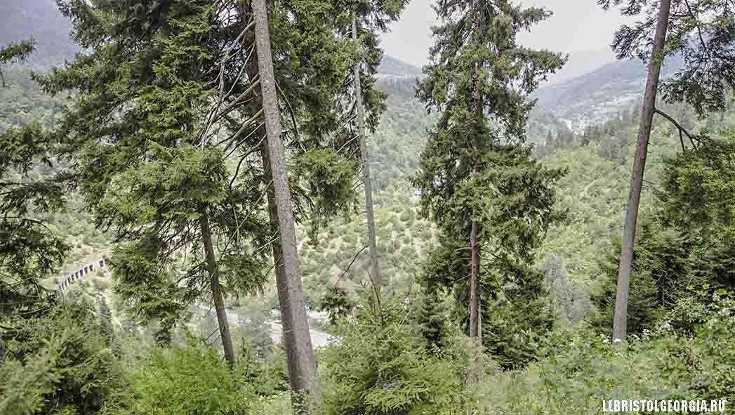 лес в Боржоми