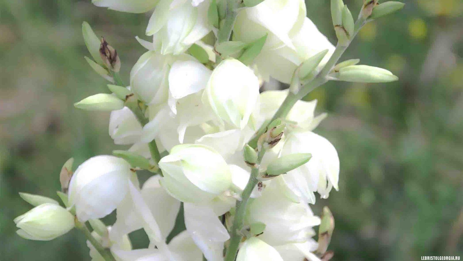 цветы в парке Боржоми