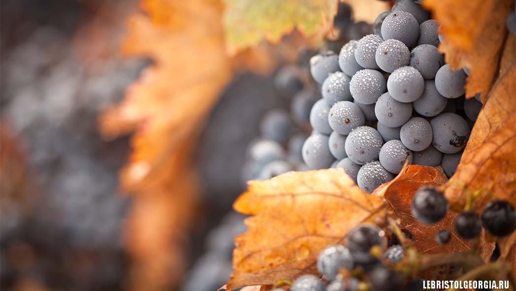 вино грузия